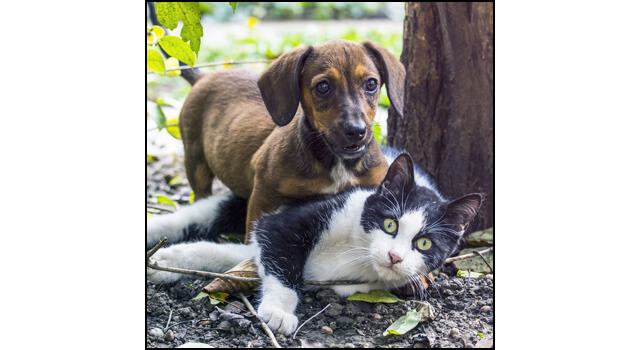 タチとネコ