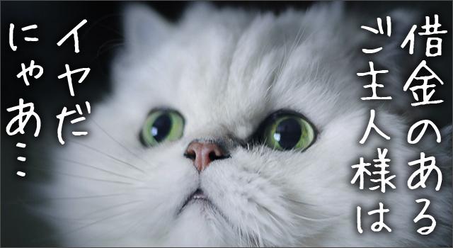 借金は早く返済してほしい猫