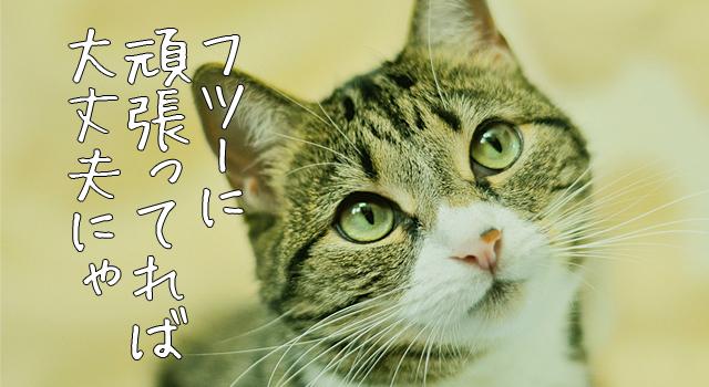 努力を続けていれば風俗嬢はクビにならないと思う猫