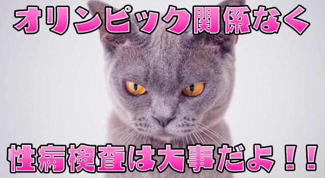 性病検査を推奨する猫