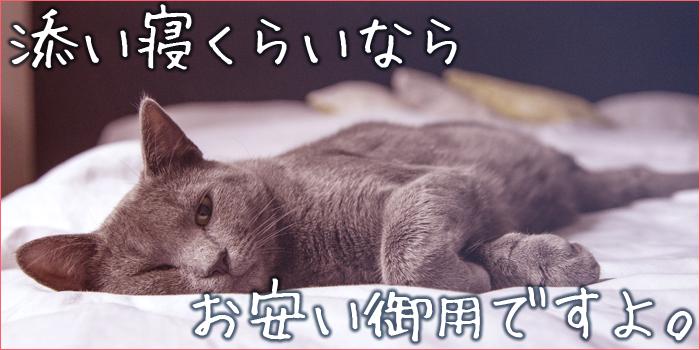 添い寝をしてくれる猫