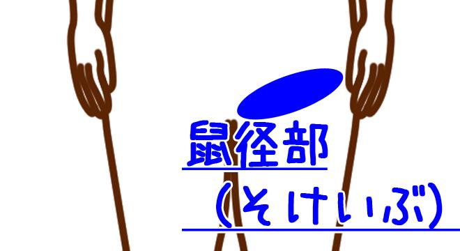 鼠径部(そけいぶ)