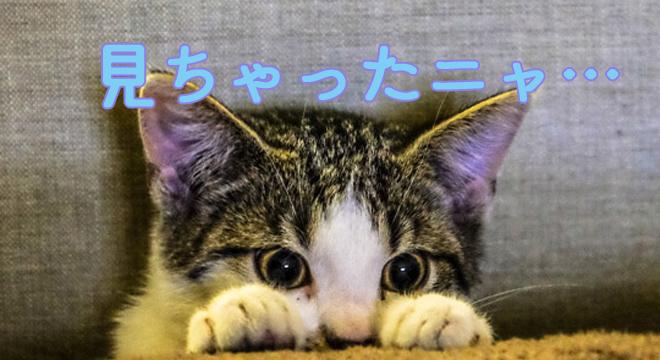 nn目撃した猫
