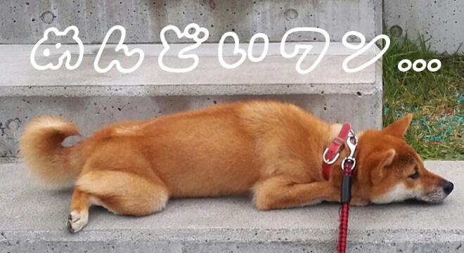 面倒臭い犬