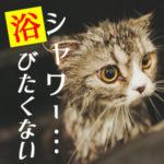 浴びたくない猫