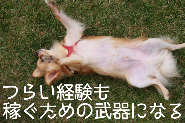 腹を見せる犬